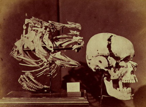 Cod's head and shoulders and human skull, 1857